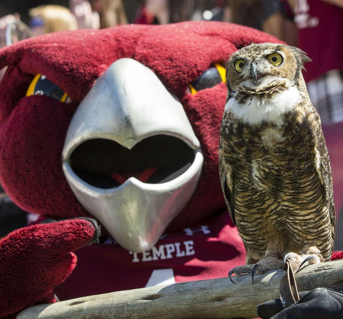 テンプルの新しいマスコットは本物のフクロウ! | テンプルこぼれ話
